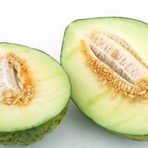 melón piel de sapo eco